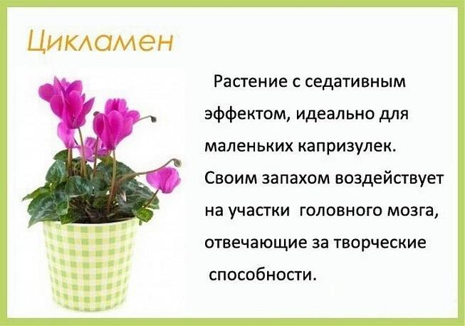 image (55)