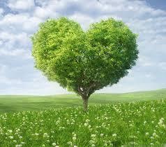 Деревья, которые нам снятся