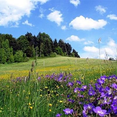 О подборе растений для личной защиты