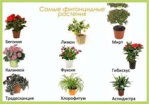 Растения полезные для ребёнка