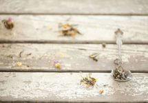 Целебные травы при первых признаках простуды