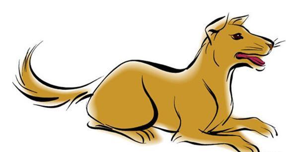 Собака в китайской астрологии