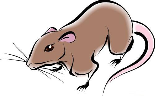 Крыса в китайской астрологии