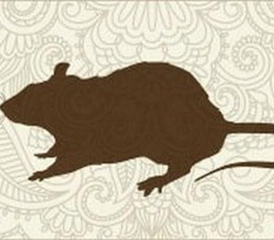 Гороскоп для людей рожденных в год Крысы