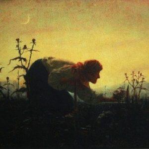 Волшебные травы из сказок и легенд